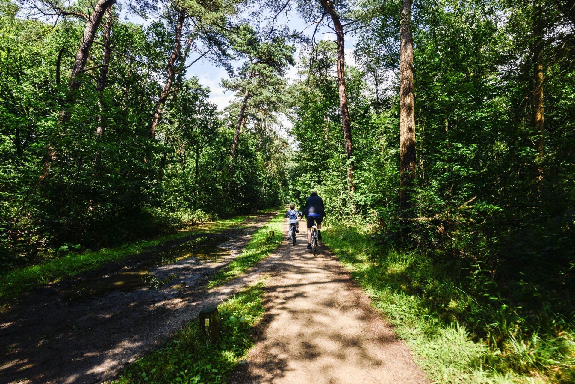 B&B Darthuizerpoort Fietsen door het bos
